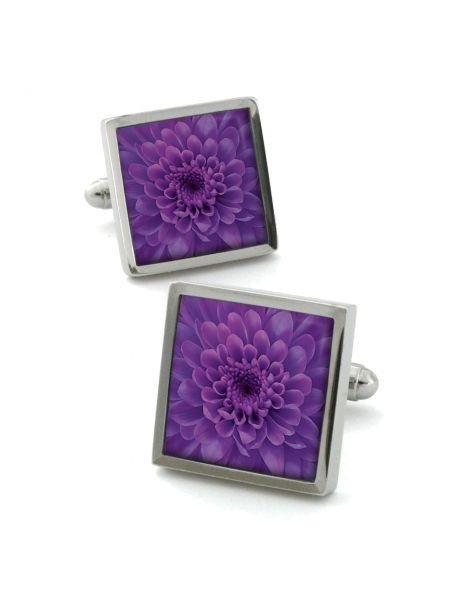 Boutons de manchette, Chrysanthemum Violet